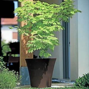 Pot Pour Arbre : petit arbre et arbuste s 39 installent aussi en terrasse ~ Dallasstarsshop.com Idées de Décoration