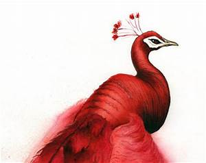 Red Peacock Bird