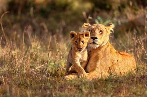 South Africa Safari  Luxury African Safari Tours, Camps. Free Load Testing Tools Epilepsy And Learning. Community Colleges Online Degrees. St Joseph Rehabilitation Hbase Query Language. Longhorn College Football Courses For College. Environmental Studies Major Jobs. Mortgage Bankers Of America 2006 Mazda 3 Mpg. Interior Design Schools Ohio. American Auto Glass Milwaukee