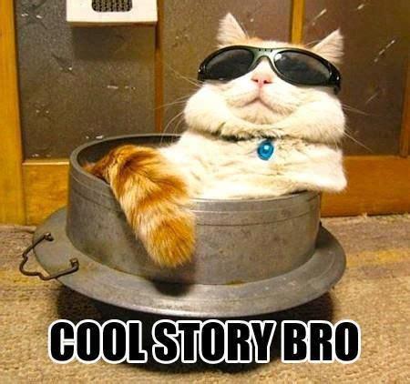 Cool Meme - cats cat memes and memes on pinterest
