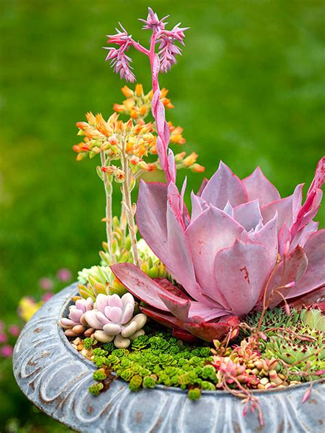 planting succulents in containers how to plant a tabletop succulent garden 4262