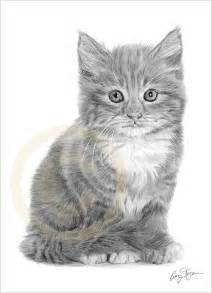 Kitten and Cat Drawings Pencil