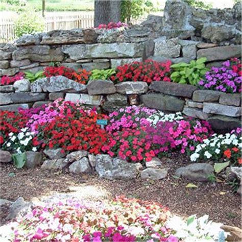 fiori per il giardino semi di fiori per giardini rocciosi mondo piante