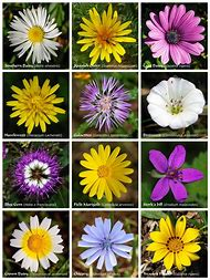 Best Flower Names Ideas And Images On Bing Find What You Ll Love