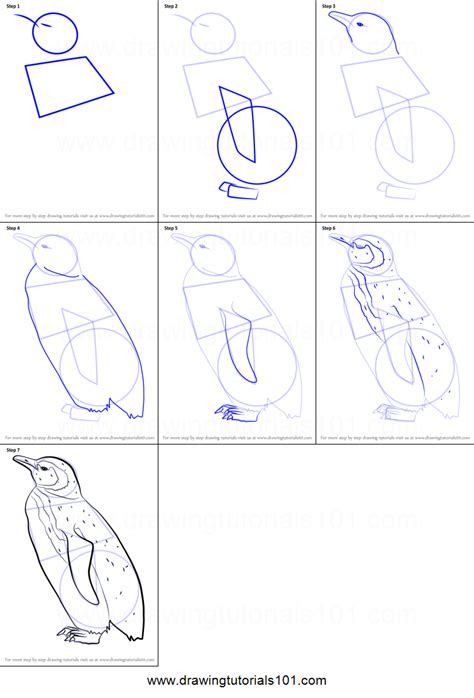draw  cute penguin printable step  step drawing