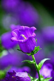 Pretty Purple Flowers