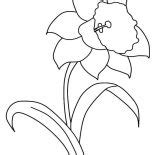 hibiscus flower drawing coloring page color luna