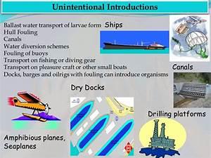 Marine bio invasion