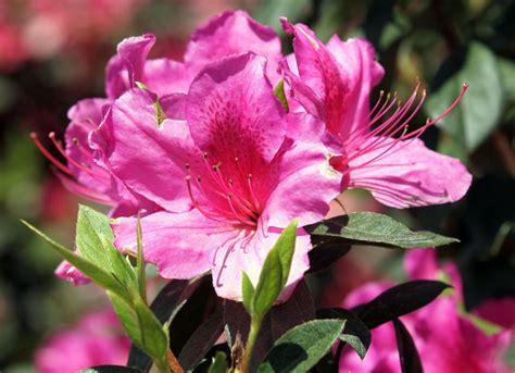 flowers  augusta national golf club  masters