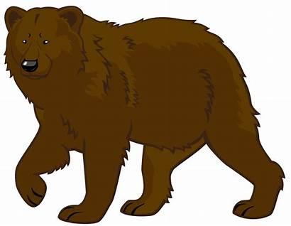 Bear Clipart Brown Transparent Climbing Tree Clipground