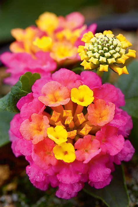 Pavasara princeses no Inčukalna. Ciemojamies dārzaudzētavā | Praktiski.lv