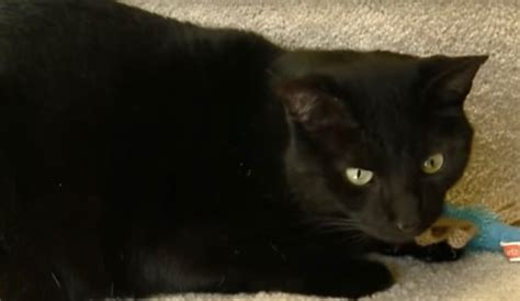 Hero Cat Saves Humans From Carbon Monoxide Poisoning