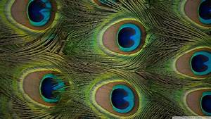 Download Peacock Feathers Wallpaper 1920x1080 | Wallpoper ...