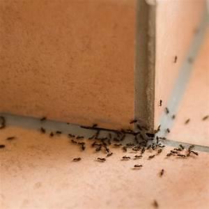 Se Débarrasser Des Araignées : se d barrasser des araign es ~ Louise-bijoux.com Idées de Décoration
