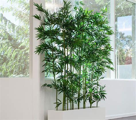pianta da interno idee per arredare il salotto con piante da interno