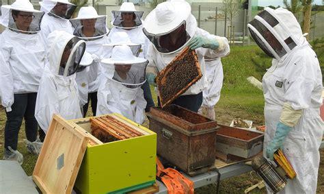 l entreprise leroy merlin mantes buchelay parraine des abeilles
