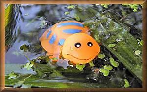 Foto Witzig Gummi Schildkrte Im Teich Tier