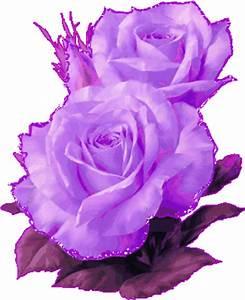 Dibujo de rosas color morado con brillos imagen #3659 ...