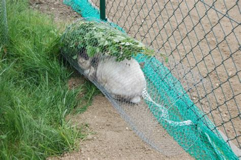 Garten Rat Pflanzen Vor Schuetzen by Gartenfreilauf