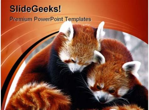 red pandas cuddling animals powerpoint templates