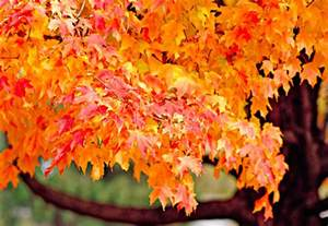 ideas to paint a kitchen fall color