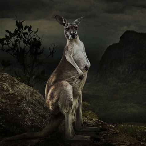 Australia  World Photography Organisation