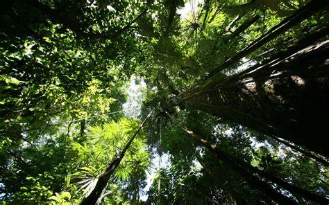 Rainforest Animals Wallpaper - rainforest wallpaper 183