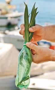 Pflanzen Bewässern Mit Plastikflasche : pflanzen als souvenir vermehrung ~ Markanthonyermac.com Haus und Dekorationen