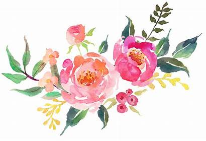 Flowers Flower Watercolor Background Floral Flores Rose