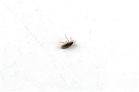 kleine fliegen in der wohnung wirksam bek 228 mpfen hausgarten net