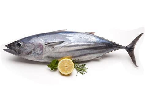 tuna fish 13 amazing benefits of tuna fish organic facts
