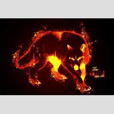 Fire Wolf Wallpaper Wallpapersafari