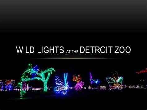 lights at the detroit zoo