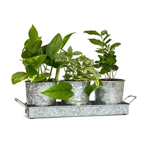 Window Seal Pots by Compare Price To Window Seal Pot Tragerlaw Biz