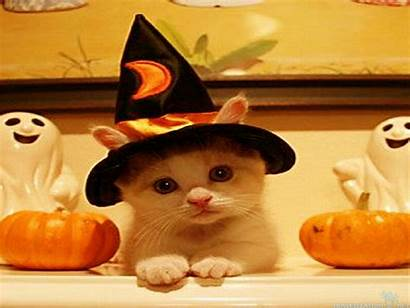 Halloween Cool Happy Android Backgrounds Wallpapers Cat