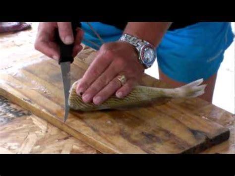 como hacer mo241os de como hacer lomos de pescado ninguna espina