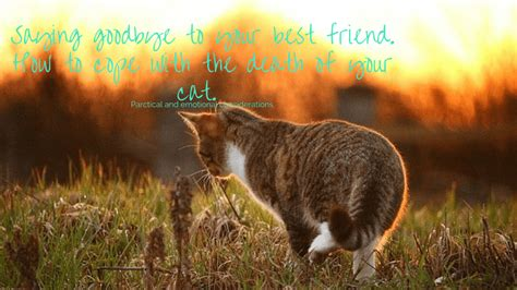 saying goodbye to your best friend coping with your cat