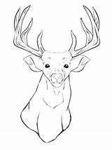Mule Coloring Pages Deer Getcolorings Print Head Animal Printable sketch template