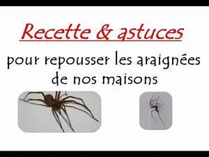 Se Débarrasser Des Araignées : recette et astuces pour repousser les araign es de nos ~ Louise-bijoux.com Idées de Décoration