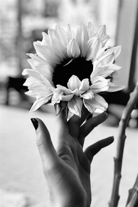 black and white aesthetic flower wallpapers