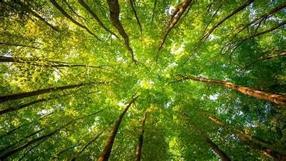 Forest Trees 4k Leaves Sunlight Nature 8k