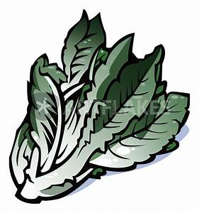 Image Gallery lettuce drawing