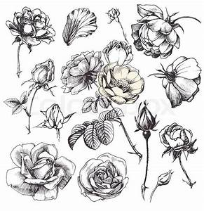 Pics For > Hand Drawn Flowers Black And White   flowers ...