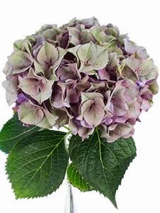 Welche Blumen Blühen Im Oktober : 1000 images about hortensien on pinterest classic emerald green and amethysts ~ Bigdaddyawards.com Haus und Dekorationen