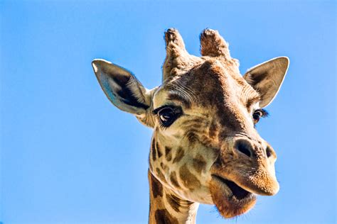 images gratuites animal faune zoo sydney mammifere