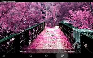Fleur de cerisier Fond d'écran 4 0 pour Android