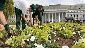 Wann Heidelbeeren Pflanzen : wann pflanzt man was im garten ~ Orissabook.com Haus und Dekorationen