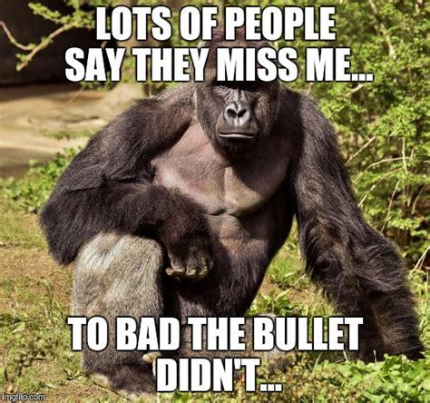 Funny Harambe Memes - harambe memes lots of people say they miss me picsmine