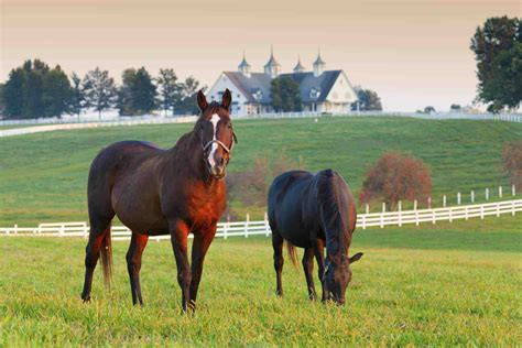 horse okay himself horses pasture background barn companions without