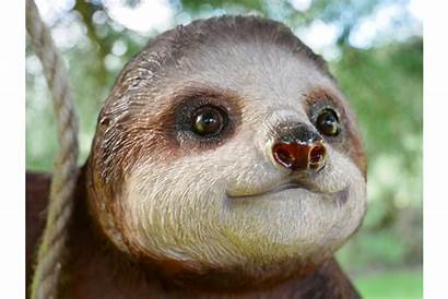Sloth Climbing Steve Transparent